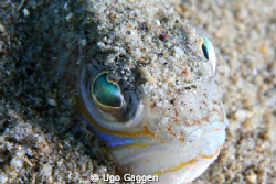 Eyes under the sand. Capo Noli. by Ugo Gaggeri 